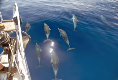 Dolphins 1 Aeolian Islands